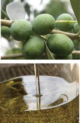 石鹸素地の原料オリーブオイル