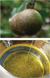 石鹸素地の原料茶実油